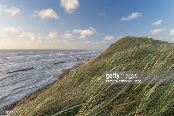 windy views from lønstrup - jutland stock photos and pictures