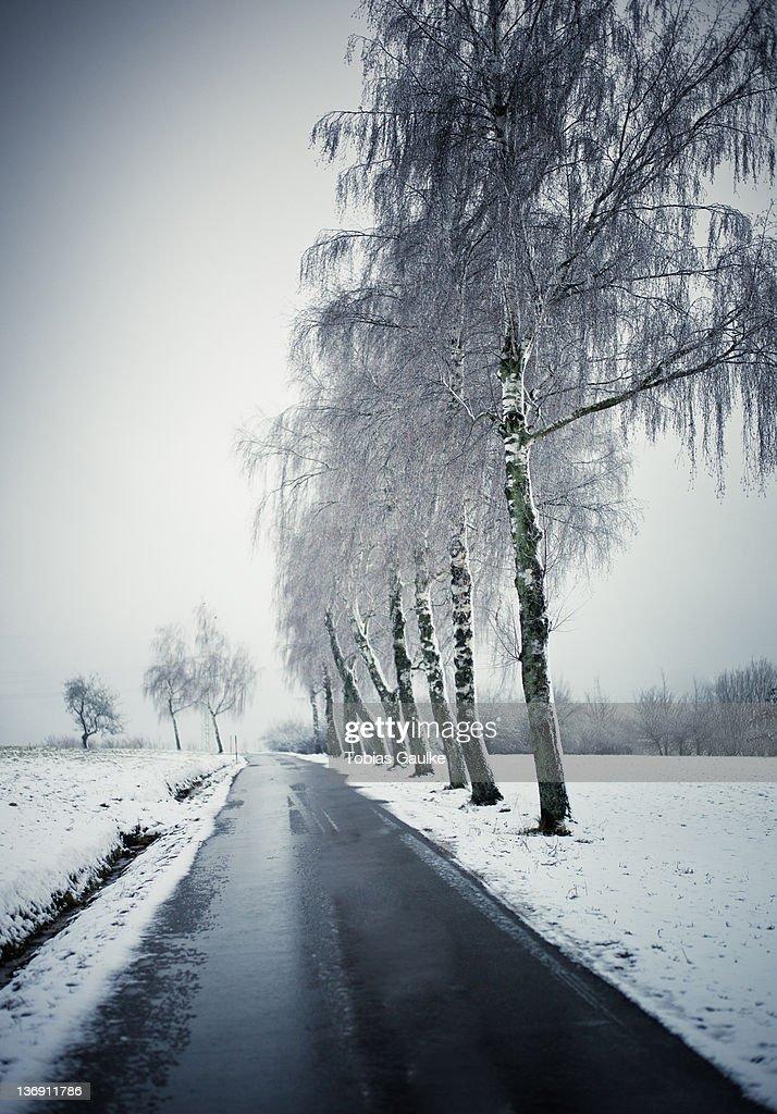 Windy winter road : Stock-Foto