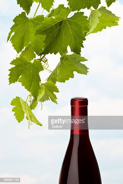 Wine and  Grape Leaves