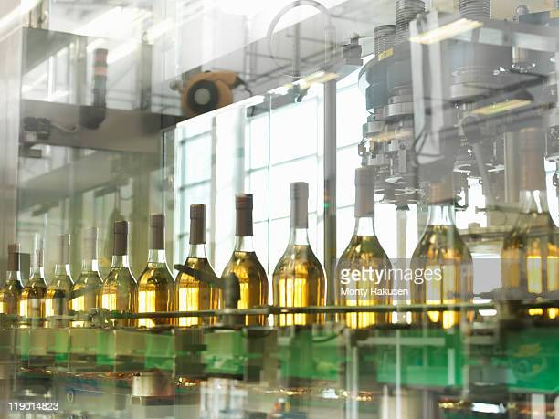 Wine bottles in plant