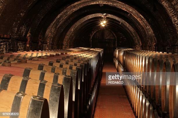 Wine cellar Fattoria Le Capezzine Azienda Agricola Avignonesi Valiano di Montepulciano Val di Chiana Tuscany Italy