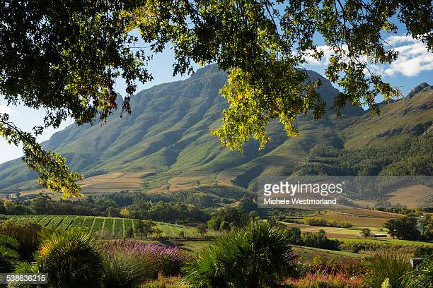 wine country in south africa - south africa stock pictures, royalty-free photos & images