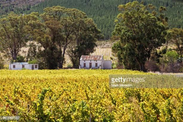 Wine country near Franschhoek