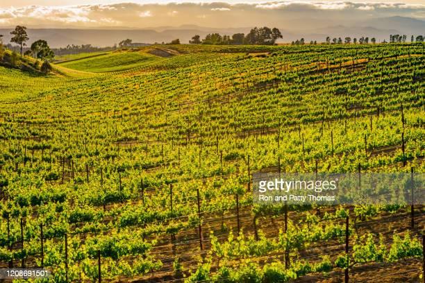 país vinícola da cidade velha temecula com seus prédios rústicos e antigos do oeste, ca (p) - temecula valley - fotografias e filmes do acervo