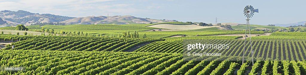 Wine Country Panorama : Stock Photo