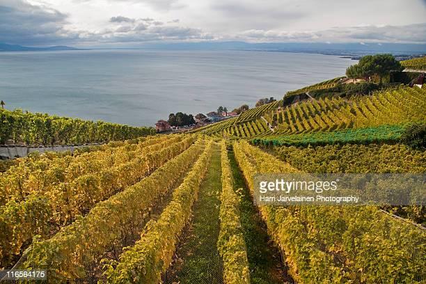 wine country - ヴォー州 ストックフォトと画像