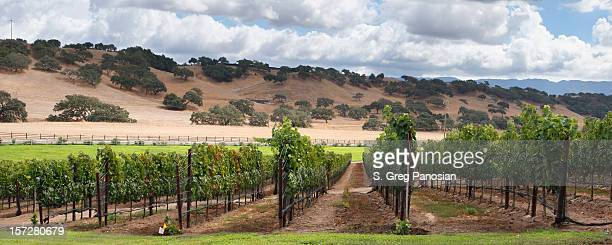 Wine Country Scenic
