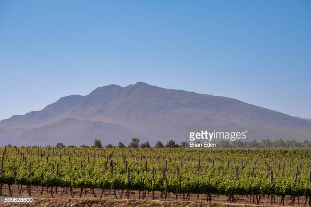 a wine farm in cape town, south africa wine region - overberg stock pictures, royalty-free photos & images