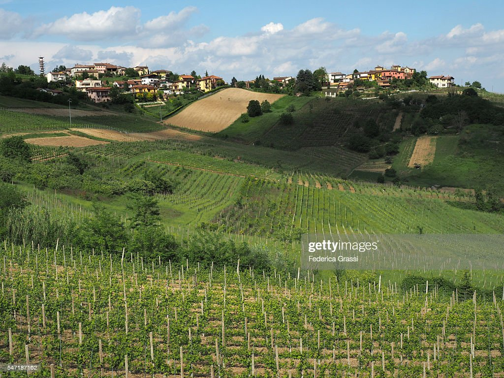 Wine Farms In Oltrepo Pavese Region Near Pavia Lombardy North Italy