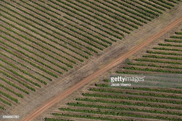 Wine fields from above