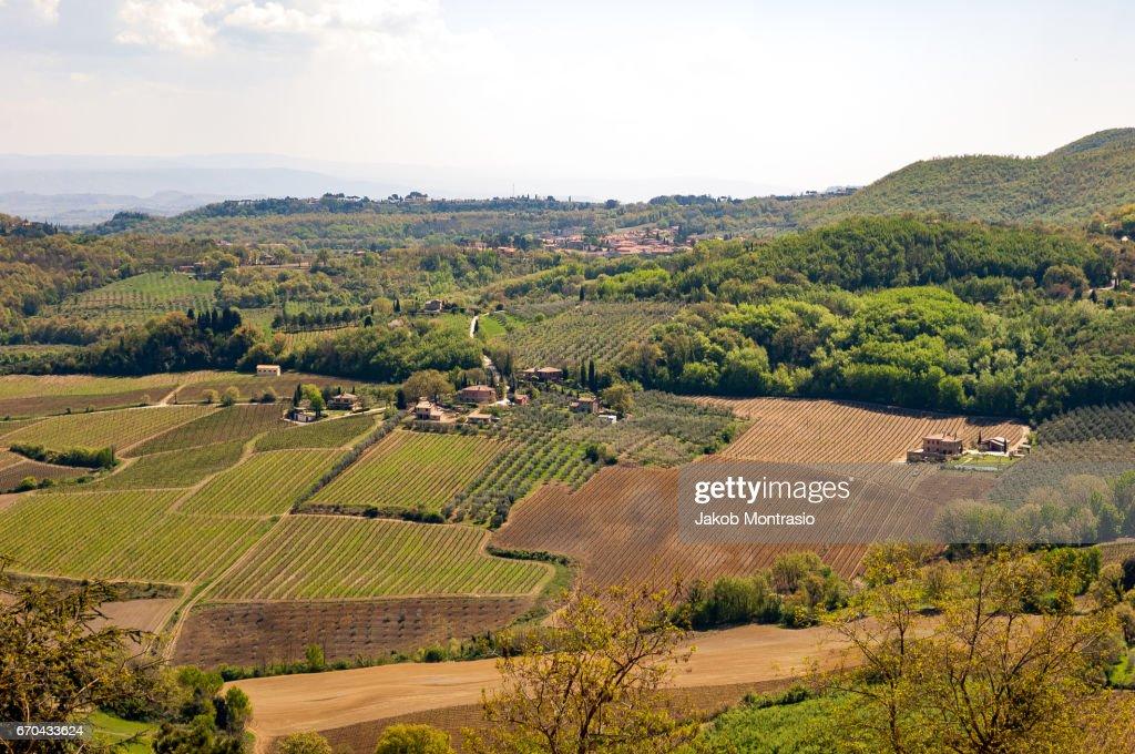 Wine fields in Tuscany : Stockfoto