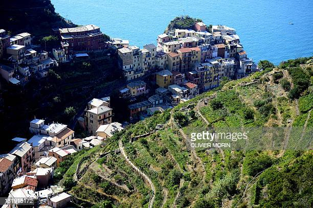 Wine fields overhang the village of Manarola in the Cinque Terre area on September 23 2013 Wine picking is atypical due to the steep land close to 50...