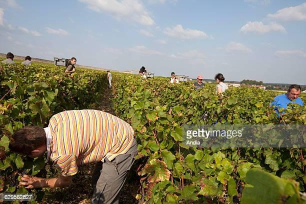 Wine from Burgundy Grape harvest wine property 'Clos Vougeot'