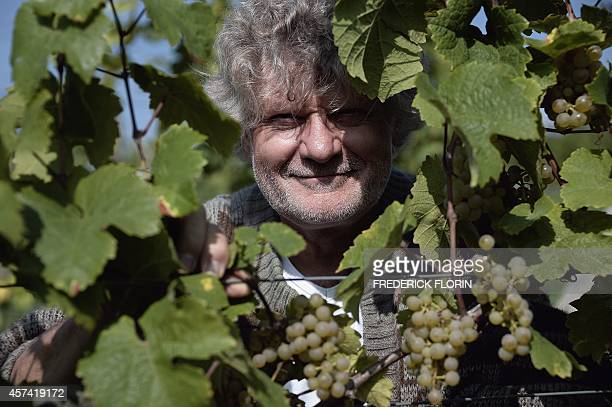 Wine grower JeanMichel Deiss is pictured among the vines at his vineyards on September 9 2014 in the Altenberg hills in Bergheim eastern France Deiss...