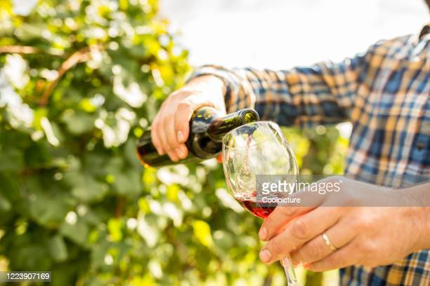 wine harvest - winery stock pictures, royalty-free photos & images