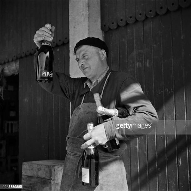Wine maker looks at Champagne bottles in the Piper-Heidsieck wine cellar during grape harvest in Champagne in September 1945.