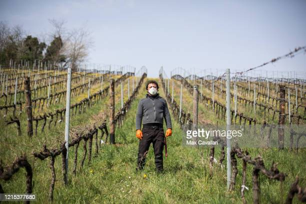 Wine producer Federico Perdisa working in his vineyard on March 28 2020 in Maggio Bologna Italy Federico Perdisa is a wine producer of a little...