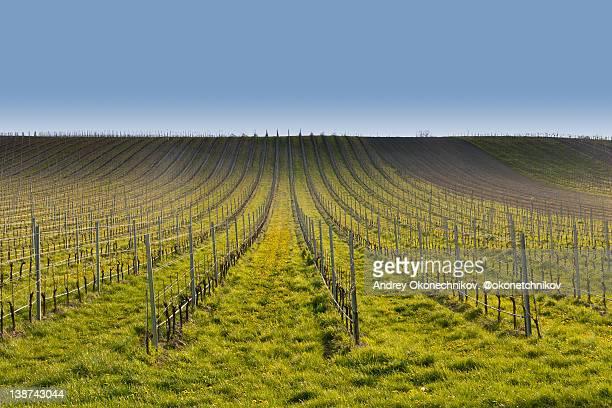 wine sprouts, rust, lower austria - rust colored - fotografias e filmes do acervo