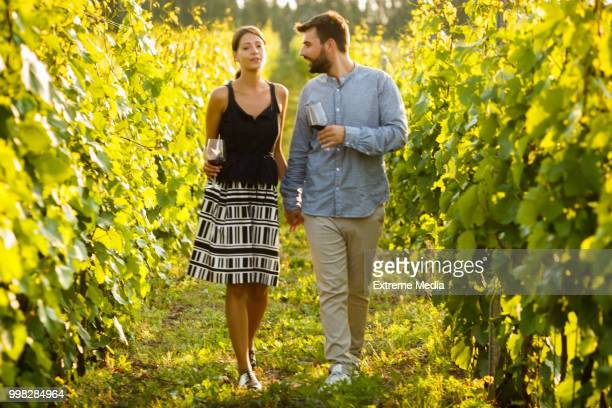 wine time in the vineyard - wine vineyard stock photos and pictures