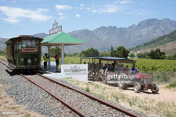 Wine tram ride through vineyards at Franschhoek Western Cape South Africa