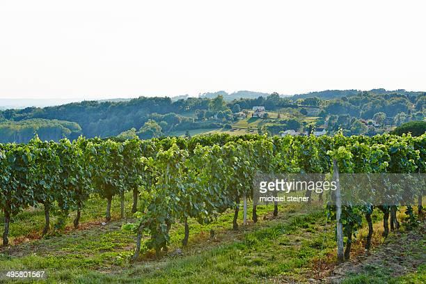 wine-growing region of the dordogne, bergerac, dordogne, aquitanien, france - ベルジュラック ストックフォトと画像