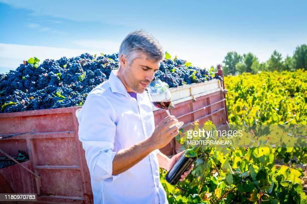 enólogo enólogo cata de vino tinto - actividad de agricultura fotografías e imágenes de stock