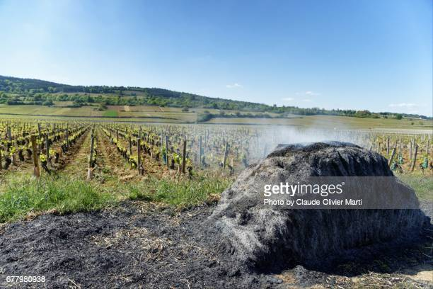 Winemakers are lighting fires in the vineyards, Burgundy, France