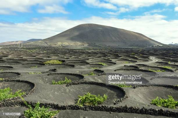 winemaking techniques in extreme volcanic landscape in lanzarote, canary islands, spain - volcanic terrain stock pictures, royalty-free photos & images