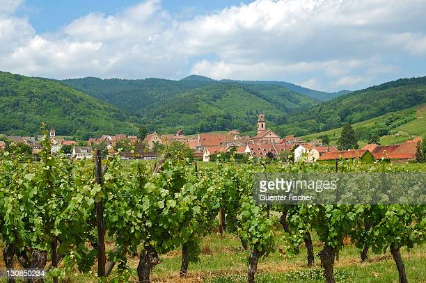 Wineries around Riquewihr Elsass France