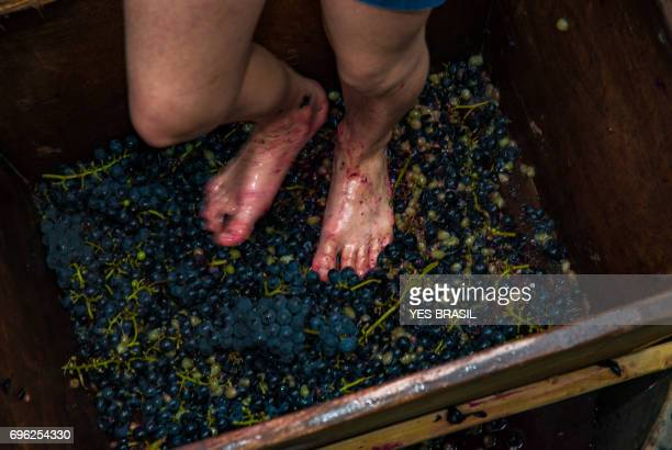 Wineries - The ancient technique of crushing grapes with their feet