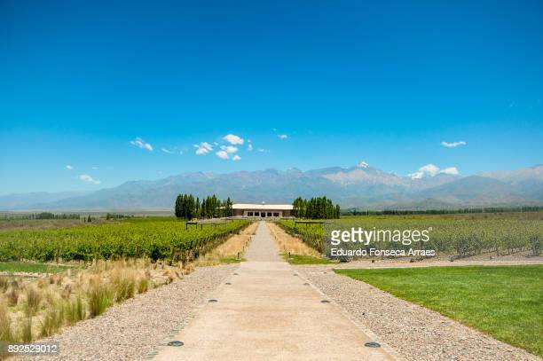 Winery in Argentina