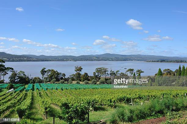 winery in tamar valley, tasmania, - launceston australia stock pictures, royalty-free photos & images
