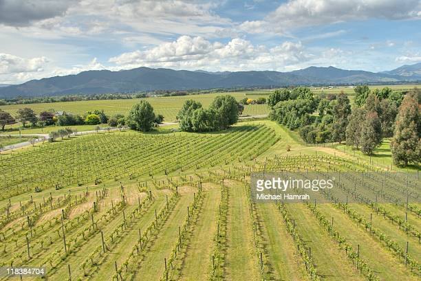 winery outside of blenheim, new zealand - blenheim new zealand stock pictures, royalty-free photos & images