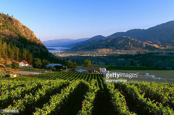 winery rural scenic lake - thompson okanagan region british columbia stock pictures, royalty-free photos & images