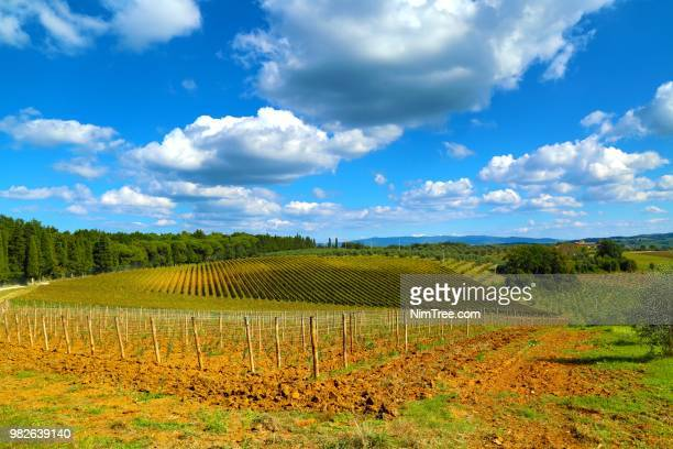 wineyard toscana - wineyard stock photos and pictures