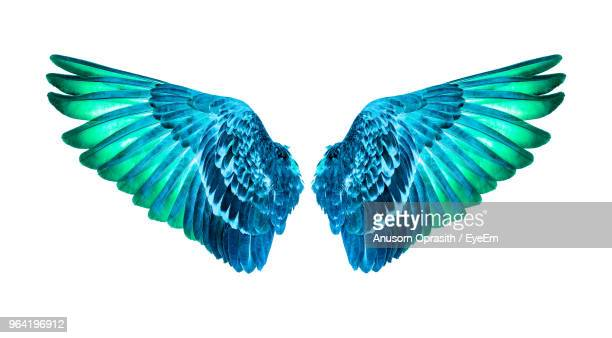 wing costume against white background - feather stock pictures, royalty-free photos & images