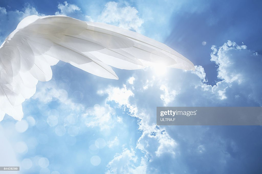 Wing. : Stock Photo