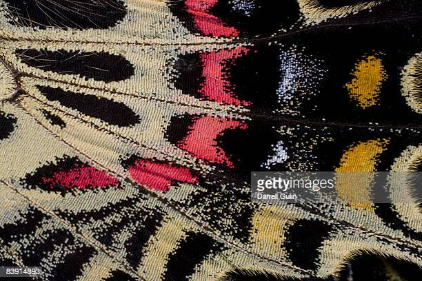 wing underside close-up bhutanitis mansfieldi - animal wing ストックフォトと画像