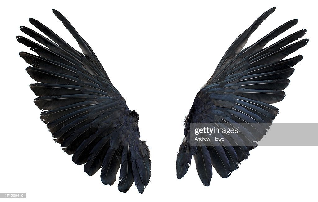 Wings Isolated on White : Stock Photo