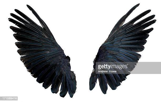 wings isolated on white - bird stock photos and pictures