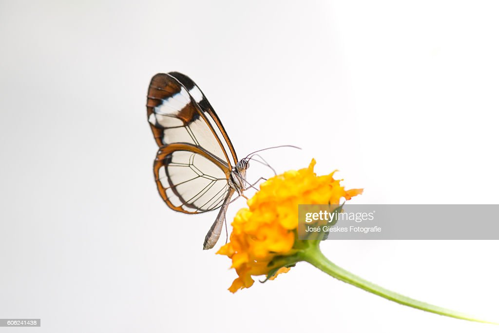 Wings of glass : Stock Photo