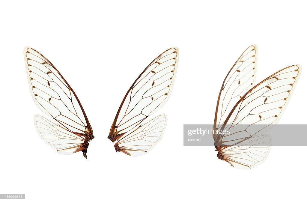 wings : Stock Photo