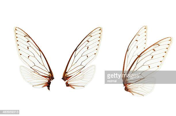 wings - insect stock pictures, royalty-free photos & images