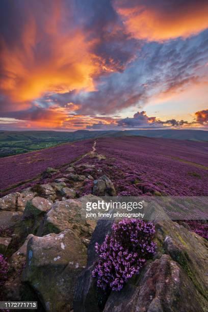 winhill purple landscape at sunset, derbyshire, peak district. uk - peak district national park stock pictures, royalty-free photos & images