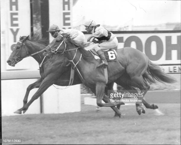 Winner Alimony StarRace 6 Eskimo Prince Hcp 1400 meters March 20 1981