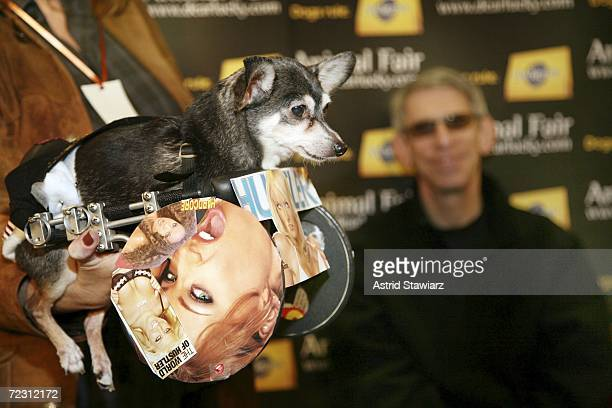 Winner of Best in Show Larry Flynt the Hustler Dog poses for photos at the Animal Fair Magazine's Annual Canine Pet Halloween Party October 30 2006...