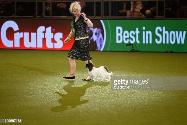 Winner of the Toy Group and Best in Show the Papillon Dylan is shown by Kathleen Roosens at the Best in Show event on the final day of the Crufts dog...