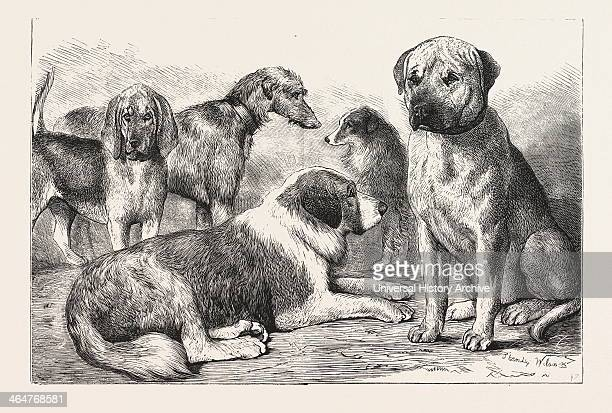 """Winners At The Dog Show Of The Kennel Club, At The Crystal Palace, London, Mr. E. Reynolds Ray's Bloodhound, """" Baron."""" Mr. C. T. Harris's Mastiff,..."""