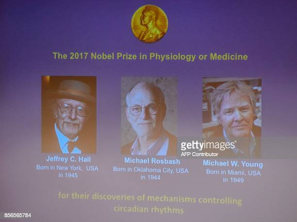 Winners of the 2017 Nobel Prize in Physiology or Medicine Jeffrey C Hall Michael Rosbash and Michael W Young are pictured on a display during a press...