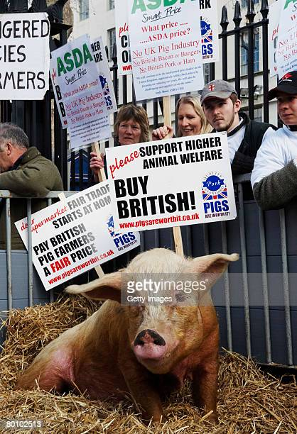Winnie the pig joins pig farmers in protest outside Downing Street on March 4 2008 in London England Pig farmers gathered to protest as supermarkets...
